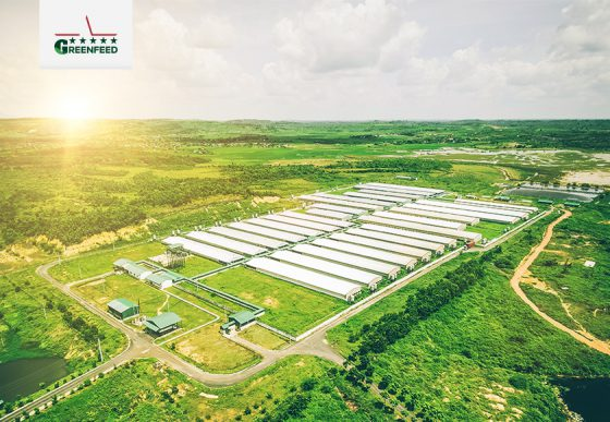 GREENFEED Effective Farming Solutions aims at professional farming