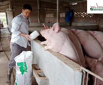 """""""Raising GREENFEED swine breed, the number of weaners increases year by year"""""""