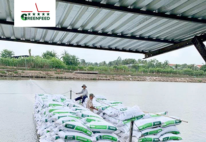 Improving the efficiency of fish cage breeding model with GREENFEED aqua feed